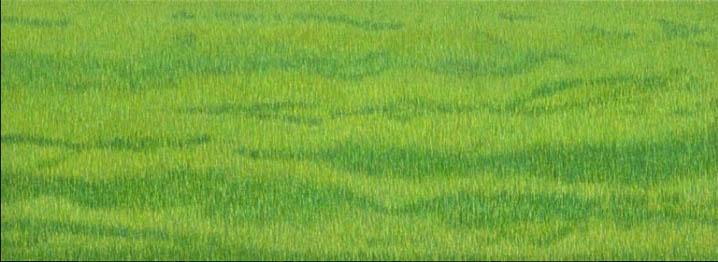 KO – Light Green Grassland